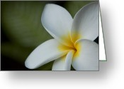 Beautiful Flowering Trees Greeting Cards - Kaena Mana i ka Lani Kaulani na Pua Plumeria Hawaii Greeting Card by Sharon Mau
