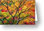 Japanese Maple Greeting Cards - Kaleidoscope of Autumn Color Greeting Card by Eggers   Photography
