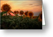 Great Plains Greeting Cards - Kansas Van Gogh Greeting Card by Thomas Zimmerman