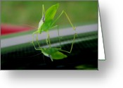 Grasshopper Greeting Cards - Katydid  Greeting Card by Karen M Scovill
