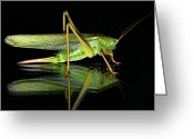 Green Grass Hopper Greeting Cards - Katydid Reflection Greeting Card by Mariola Bitner
