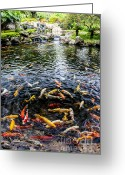 Face Greeting Cards - Kauai Koi Pond Greeting Card by Darcy Michaelchuk
