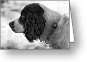 Spaniel Print Greeting Cards - Kaya monochrome Greeting Card by Steve Harrington