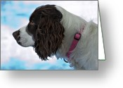 Spaniel Print Greeting Cards - Kaya Greeting Card by Steve Harrington