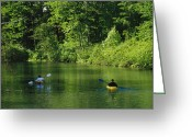 River Scenes Greeting Cards - Kayakers Paddle In The Headwaters Greeting Card by Raymond Gehman