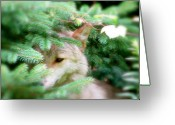 Photograph Of Alpha Wolf Greeting Cards - Keep Out Of Sight Greeting Card by Debra     Vatalaro