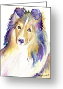 Sheltie Greeting Cards - Kelly Greeting Card by Pat Saunders-White