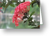 Tropical Photographs Greeting Cards - Kerala Beauty Greeting Card by Mini Arora
