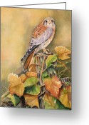 Red Leaves Painting Greeting Cards - Kestrel in Fall Greeting Card by Patricia Pushaw