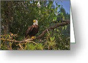 Eagle Prints Greeting Cards - Kettle River Eagle Greeting Card by John  Greaves