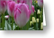 Most Photographed Photo Greeting Cards - Keukenhof Tulip Greeting Card by Megan Zopf