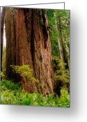 Brown Leaves Greeting Cards - Kevin and the Big Tree - Redwood National Forest Greeting Card by Michelle Calkins