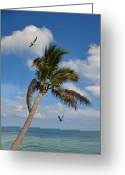 Key West Island Greeting Cards - Key West Island Paradise Greeting Card by Bill Cannon