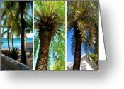 Florida House Greeting Cards - Key West Palm Triplets Greeting Card by Susanne Van Hulst