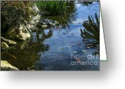 Lilly Pad Greeting Cards - Kickin with the Koi Greeting Card by Balanced Art