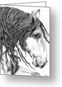 Wild Horse Drawings Greeting Cards - Kinda different horse Greeting Card by Kate Black