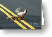 Poultry Photo Greeting Cards - Kindergarten  Greeting Card by Heiko Koehrer-Wagner