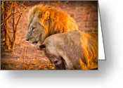 African Cats Greeting Cards - King and Queen Greeting Card by Adam Romanowicz