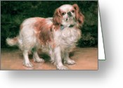 Hounds Greeting Cards - King Charles Spaniel Greeting Card by George Sheridan Knowles