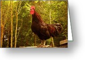 Ym_art Greeting Cards - King of the Barnyard - Rooster Greeting Card by Yvon -aka- Yanieck  Mariani