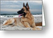 Purebreed Greeting Cards - King Of The Beach - German Shepherd Dog Greeting Card by Angie McKenzie