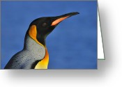 Austral Greeting Cards - King Of The Beach Greeting Card by Tony Beck