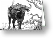 Buffalo Drawings Greeting Cards - King of the Cape-Buffalo Greeting Card by Doug Hiser