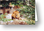 African Cats Greeting Cards - King Of The Hill Greeting Card by Jan Amiss Photography