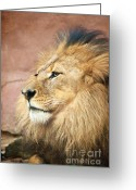 Mammal Photograph Greeting Cards - King of the Jungle Greeting Card by Bob and Nancy Kendrick