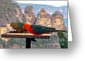 Colorful Birds Photo Greeting Cards - King Parrots and The Three Sisters Greeting Card by Kaye Menner