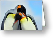 Antarctica Greeting Cards - King Penguin Greeting Card by Tony Beck