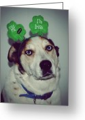 Wisconsin Greeting Cards - Kiss Me Im Irish Dog  Humane Society Wisconsin Greeting Card by Laura Pineda