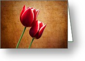 Tulip Greeting Cards - Kissed By The Light Greeting Card by Ian Barber