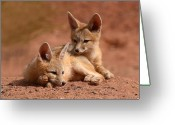 Twins Greeting Cards - Kit Fox Pups On A Lazy Day Greeting Card by Max Allen