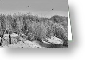 Black Kites Greeting Cards - Kites Over Dunes - Jersey Shore Greeting Card by Angie McKenzie