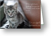Kitten Greeting Card Greeting Cards - Kitten Greeting Card Greeting Card by Micah May