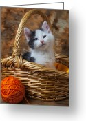 Whiskers Greeting Cards - Kitten in basket with orange yarn Greeting Card by Garry Gay
