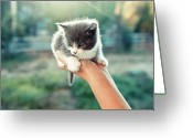 Human Hand Greeting Cards - Kitten In Hand, 2010 Greeting Card by Emily Golitzin