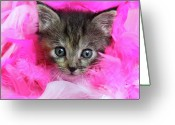 Staring Greeting Cards - Kitten In Pink Feathers Greeting Card by Pat Gaines