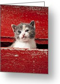 Whiskers Greeting Cards - Kitten in red drawer Greeting Card by Garry Gay