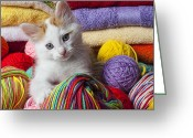 Yarn Greeting Cards - Kitten in yarn Greeting Card by Garry Gay