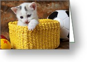 Pussy Greeting Cards - Kitten in yellow basket Greeting Card by Garry Gay