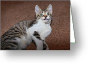 Green Eyes Greeting Cards - Kitten Laying On Carpet Greeting Card by CasaBlanca Images