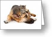 Watch Dog Greeting Cards - Kitten laying on German Shepherd Greeting Card by Susan  Schmitz