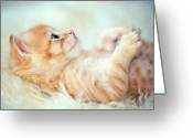 Indoors Greeting Cards - Kitten Lying On Its Back Greeting Card by Susan.k.