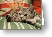 Feline Greeting Cards - Kitten Lying On Striped Couch Greeting Card by Kim Haddon Photography