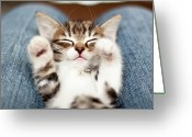 Cat Eyes Greeting Cards - Kitten On Lap Greeting Card by Fjola Dogg Thorvalds