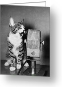 Sp Greeting Cards - Kitten on the Radio Greeting Card by Syd Greenberg and Photo Researchers