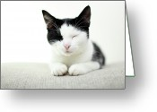 Cat Eyes Greeting Cards - Kitten Sleeping Greeting Card by Marcel ter Bekke