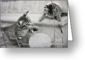 Melon Greeting Cards - Kittens and Cantalope Greeting Card by Jan Prewett
